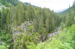 风景在Retezat国家公园 免版税库存照片