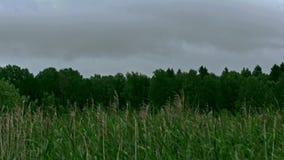 风景夏天森林和领域timelapse 绿色森林和夏天自然 股票录像