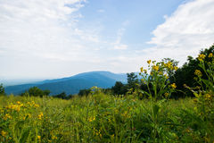 风景夏天风景忽略推进Shenandoah全国Pa 免版税库存图片