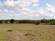 风景大开放射击在一个领域的英国与树的 免版税库存照片