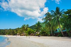风景好日子、天空蔚蓝和海滩、棕榈和海 库存照片