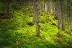 风景密集的山森林 图库摄影