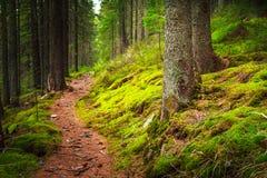 风景密集的山森林 库存图片