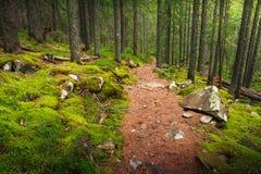 风景密集的山森林 免版税库存图片