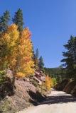 风景山驱动通过五颜六色的白杨木 免版税库存照片