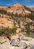 风景布赖斯峡谷 免版税库存图片