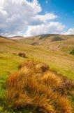 风景开放荒野在布雷肯比肯斯山 免版税库存照片
