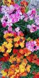 风景快乐的花卉夏天背景 黄色,红色,桔子,在绿草背景的紫色夏天花  库存照片