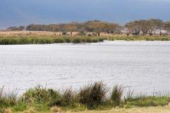 风景恩戈罗恩戈罗保护区,坦桑尼亚 库存照片