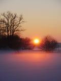 风景日落在多雪的森林里 库存照片