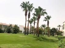 风景是热带的与与绿色叶子的美丽的详尽的棕榈树在与白色的一种热带海温泉放松手段 免版税图库摄影