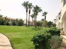 风景是热带的与与绿色叶子的美丽的详尽的棕榈树在与白色的一种热带海温泉放松手段 库存照片