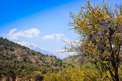 风景智利 库存图片