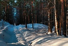 风景有多雪的冬天森林 免版税图库摄影