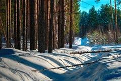 风景有多雪的冬天森林 图库摄影