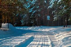 风景有多雪的冬天森林 免版税库存照片