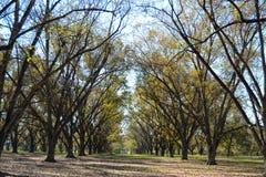 风景有天空的胡桃树丛 库存图片