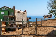 风景有观点的农场、小屋从火车和牛 免版税库存照片
