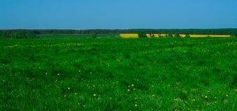 风景有黄色领域的看法 图库摄影