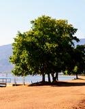 风景树和湖 库存图片
