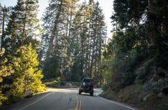风景森林公路在美洲杉国家公园,加利福尼亚,美国 免版税库存图片