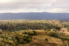 风景森林和种田有小山背景 免版税库存照片