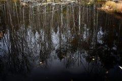 风景森林自然水镜子 免版税图库摄影