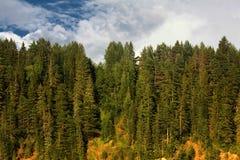 风景森林自然水镜子 库存图片