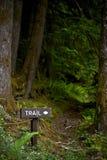 风景森林足迹 免版税库存照片