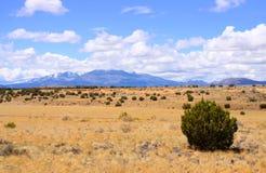 风景沙漠的横向 库存照片