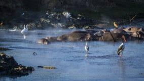 风景河在克鲁格国家公园,南非 免版税库存图片