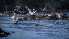 风景河在克鲁格国家公园,南非 库存照片