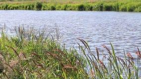 风景河慢慢地流动的水 股票录像