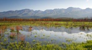 风景沼泽水全景山风景在内地阿拉斯加 图库摄影