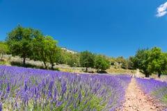 风景法语Luberon 库存图片