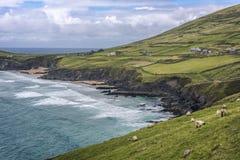 风景海滩和农村风景在Slea头,幽谷半岛,凯里郡,爱尔兰 库存图片