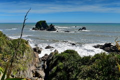 风景海狮群陶朗阿海湾在新西兰 图库摄影