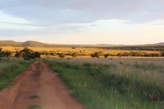风景灌木草原路 库存照片