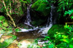 风景照片、美丽的瀑布和槭树在雨林,瀑布在泰国 免版税库存图片