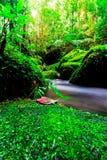 风景照片、美丽的瀑布和槭树在雨林,瀑布在泰国 免版税图库摄影