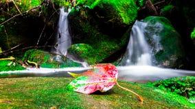 风景照片,在雨林的美丽的瀑布,瀑布在泰国 免版税库存图片