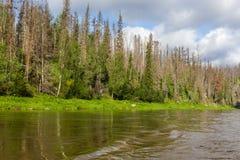 风景用水 西伯利亚的北部的河 俄国 免版税库存照片