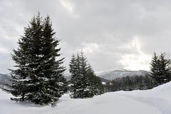 风景的冬天在北海道 免版税库存图片