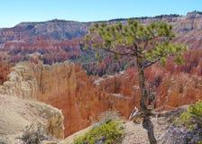 风景的布莱斯峡谷国家公园 图库摄影