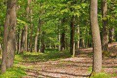 风景的森林 库存图片
