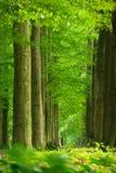 风景的森林 免版税图库摄影