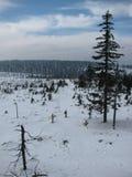 风景的看法在冬天 库存图片