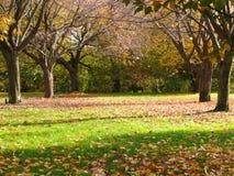 风景的秋天 免版税图库摄影