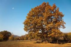 风景的秋天 库存照片
