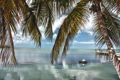 风景的翅棕榈 免版税库存图片